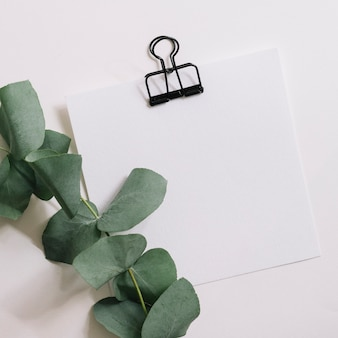 Black paperclip on white blank paper with green twig against white background