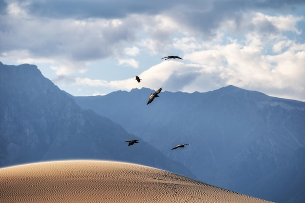 Black phorons fly over the desert. mountains in the background.