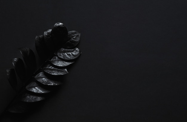 Black plant on a black table. unusual artistic luxurious cosmetics concept.