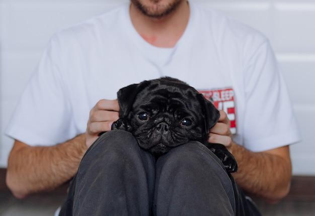 Black pug is lying on his lap, and sad