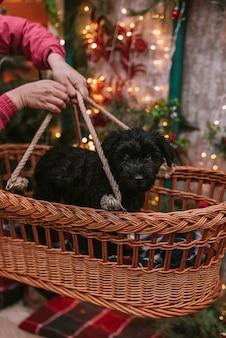 かごの中の黒い子犬
