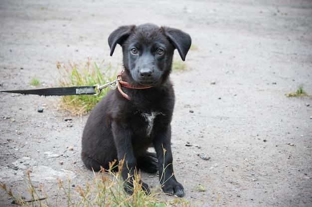 屋外の地面に座っているひもにつないで黒い子犬