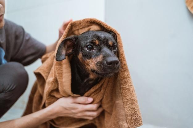 タオルで黒い子犬