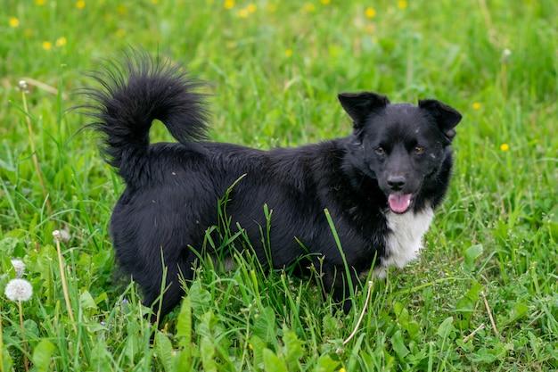 Черная чистокровная собака в поле на траве. фото высокого качества