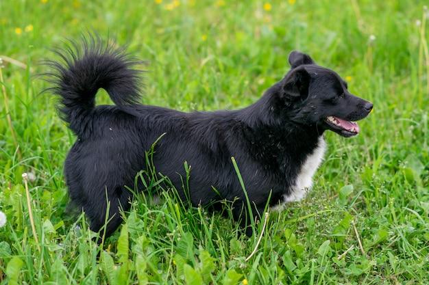 Черная породистая собака в поле на траве. фото высокого качества