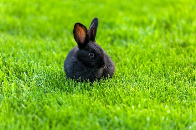 黒いウサギ。芝生の上のウサギ緑の草の上のウサギ、おびえたウサギ、ウサギと子供。緑の草の上に一緒に座っている2匹の小さな黒いかわいいウサギがクローズアップします。