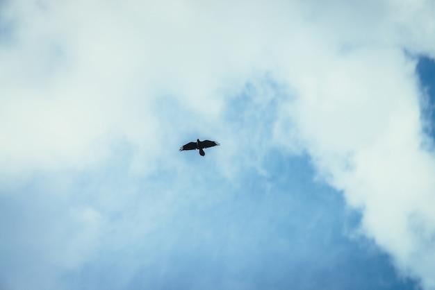 青い空のフレームの中央に黒いカラスが舞い上がる。雲と空に黒いカラスと風光明媚な自然の背景。捕食者は上から狩りをします。略奪的な鳥とミニマリストの雲景。自然のミニマリズム。