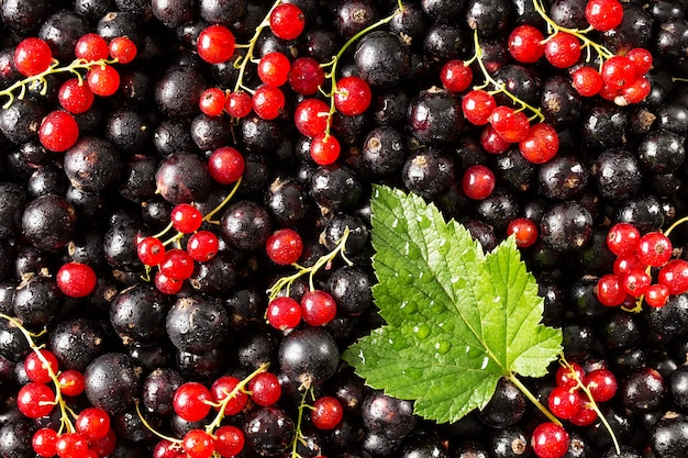 Black and red currant with a leaf against