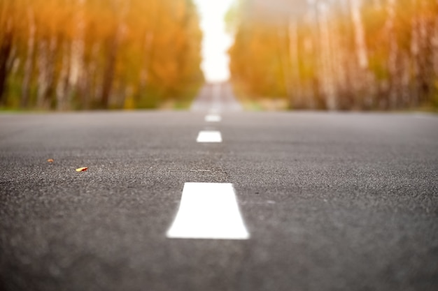 晴れた秋の夜の黒い道のパノラマ。セレクティブフォーカス