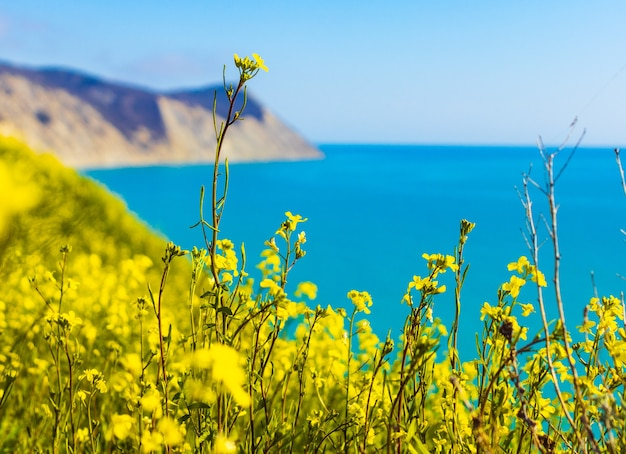 Побережье черного моря. лысая гора. красивое синее море в анапе