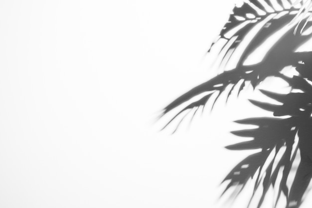 Black shadow leaves with sunlight on white backdrop