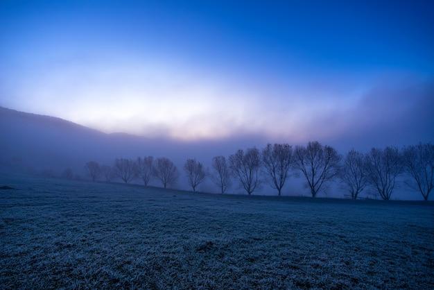 아름다운 우크라이나의 그림 같은 카르파티아 산맥에서 푸른 솜털 안개로 덮인 작은 나무의 검은 실루엣