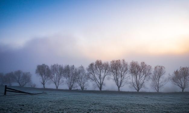 Черные силуэты небольших деревьев, покрытых голубым пушистым туманом в живописных карпатах в красивой украине.