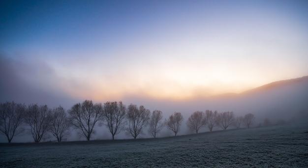 Черные силуэты небольших деревьев, покрытых голубым пушистым туманом в живописных карпатах в прекрасной украине.