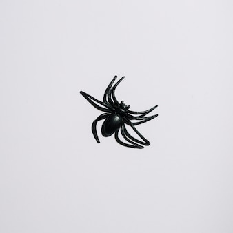 Black spider laid in middle