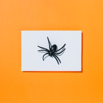 Black spider on piece of white paper