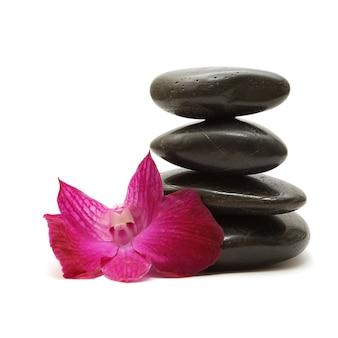 Черные камни и красочные орхидеи на белом фоне