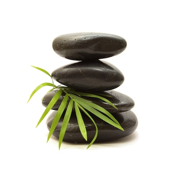 黒い石と白い背景の上の緑の葉