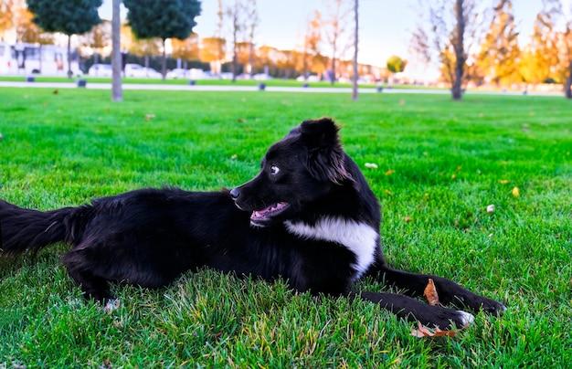 公園の黒い野良犬は緑の草の上に横たわっています。