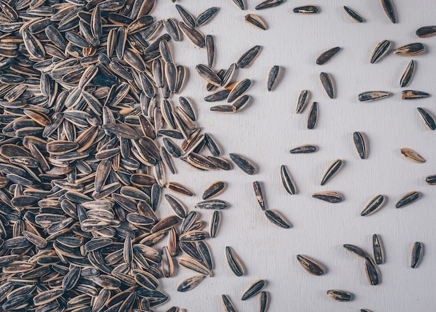 Black sunflower seeds on a white background. top view.