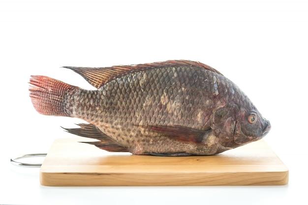 Black tilapia or tilapia