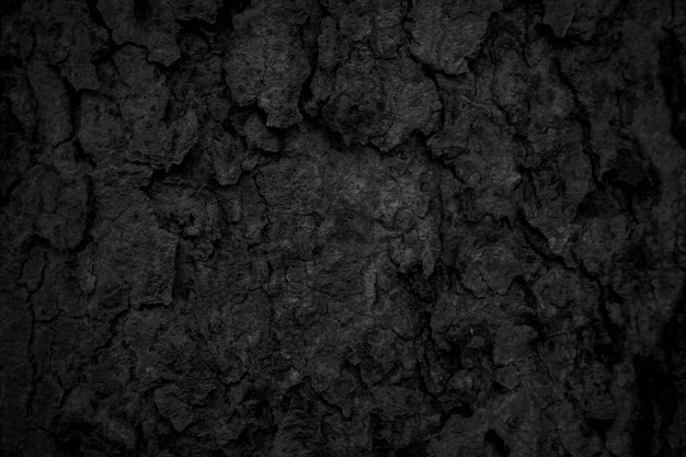 Black tree bark background natural beautiful old tree bark texture according to the age of the tree with beautiful bark during the summer