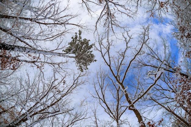 잎이없는 검은 나뭇 가지 실루엣