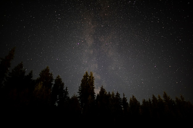 Черные деревья в осеннюю звездную ночь