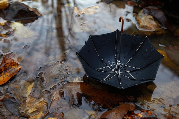 가을 가을 잎 poddle에 검은 우산