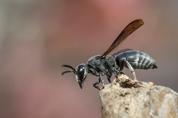 Black wasp on the stump. insect. animal.