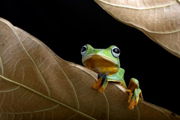 Черная лягушка с перепонками среди засохших листьев