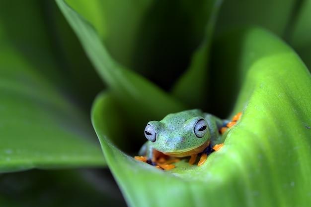 잎사귀에 검은 물갈퀴가 달린 나무 개구리