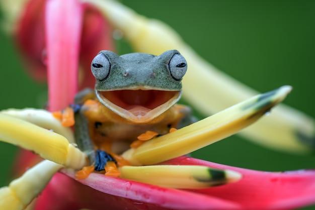 Древесная лягушка с черными перепонками сидит на цветке