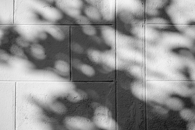 Black and white abstract background textuer of shadows leaf on a concrete wall