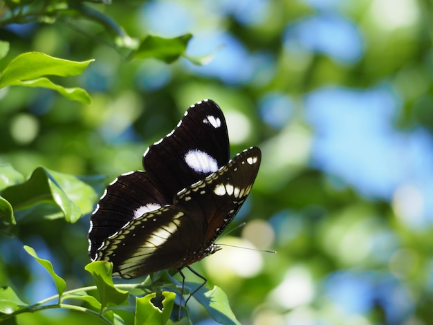 Black and white butterfly on the branch of a tree