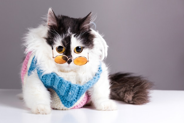 Black white cat in knitted winter sweater and glasses on gray