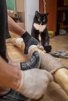 Black and white cat looking to man making makeshift cat tree at home. cat tree - important device for activity of domestic cat. lovely pet care.