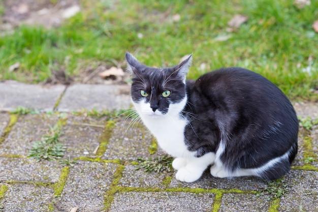 Un gatto bianco e nero seduto su un sentiero nel parco