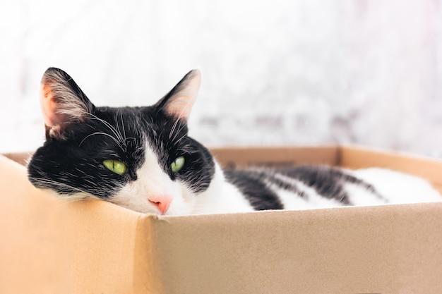 Black and white cat sleeps in a cardboard box