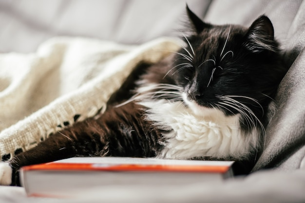 Black and white cat sleeps on the couch hugging a book, reading and relaxation