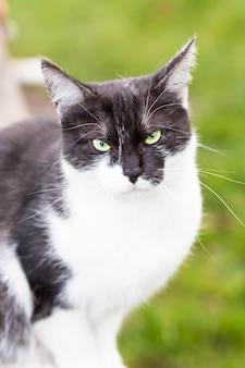 Un gatto bianco e nero in soft focus seduto nel parco