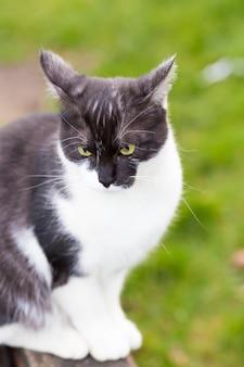 Un gatto bianco e nero in soft focus seduto su un'altalena in un parco giochi