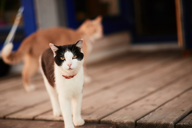 Black and white cat stands on the wooden porch of a country house