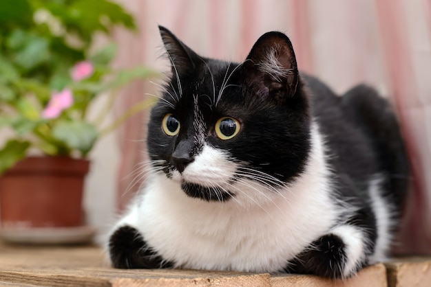 Black and white cat on a wooden surface