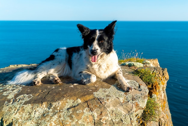 A black-and-white dog lies with its paw tucked up on the edge of a rocky sea shore.