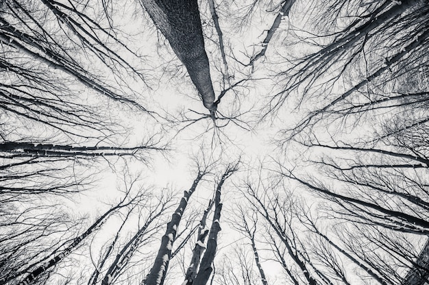 Black and white fisheye d winter trees