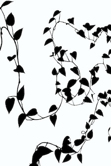 Black and white illustration of climbing plants with many leaves on a white background with clipping path