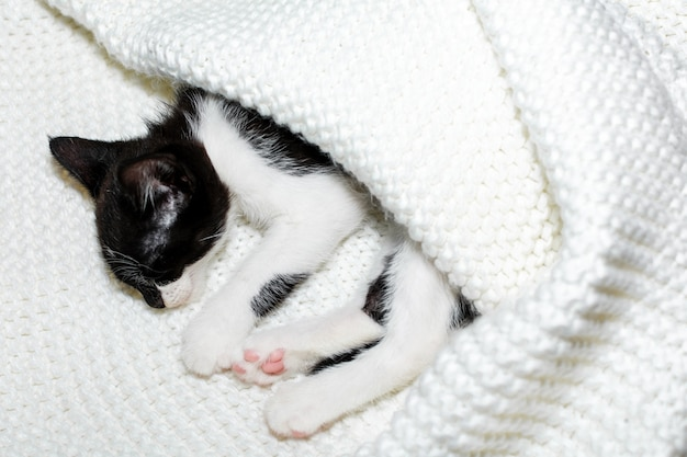 Black and white kitten sleeping under a blanket, copy space