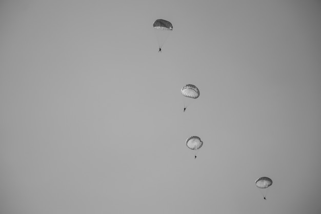 Black and white picture jump of paratrooper with white parachute, military parachute jumper in the sky.
