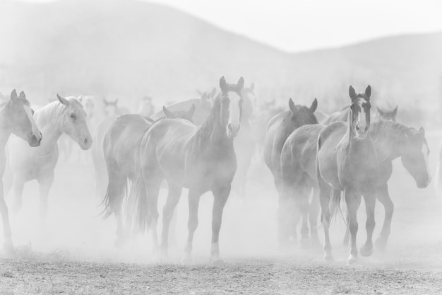 Black and white ranch horses with dust